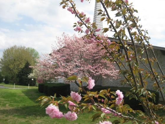 Brentwood spring 2