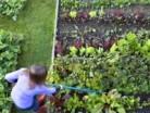 gardening-200x300